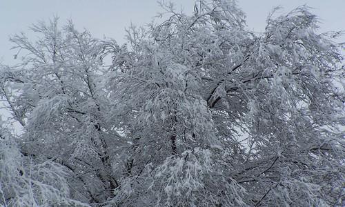 Winters Wonders