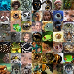 Eyes, world, earth, gandhi, eye for an eye, animal eyes, human eyes,