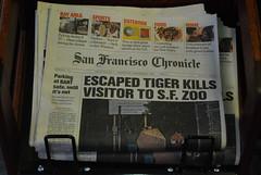 Escaped Tiger Kills Vistor to SF Zoo