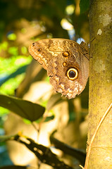 Schmetterlinge mit wunderschönem Muster