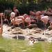 San Diego Zoo 121