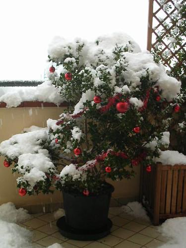 agrifoglio di Natale sotto la neve