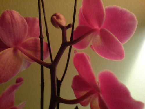 march orchids
