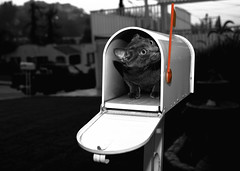 we've got mail.