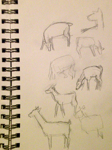 deer Sketches