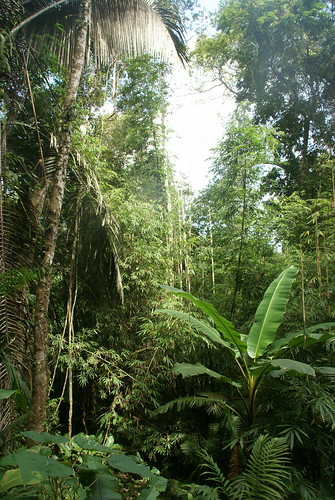 Laos: Gibbon Experience