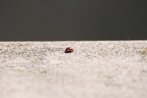 Lady Bug, Lady Bug Fly Away Home