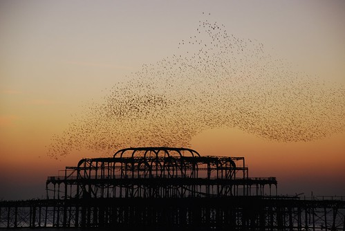 Starlings over the West Pier, Brighton
