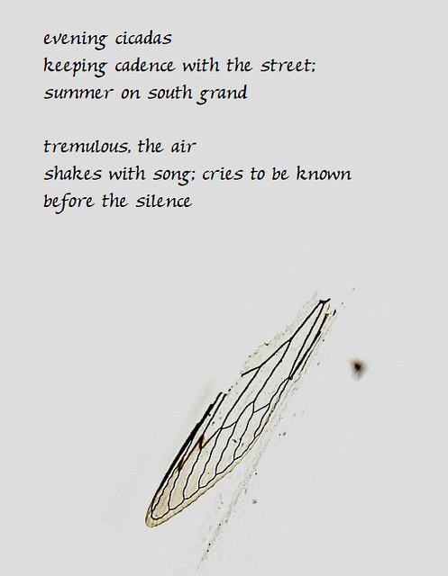 haiku cicada