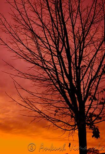 Sunset Peach