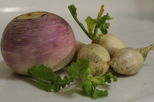 Purple Top turnip and Hakurei turnips