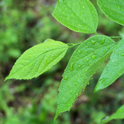 leaves n rain 3 great
