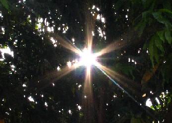 TreeLightatIvans_20071012_01x