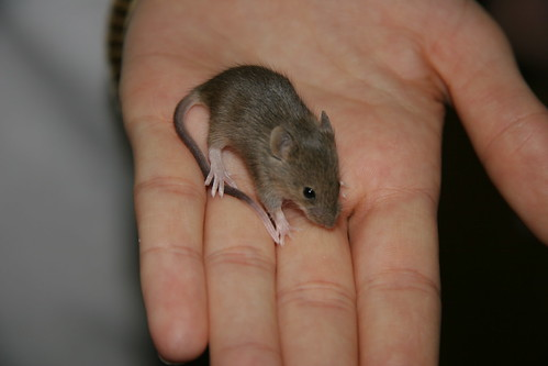 Mouse in the Hand