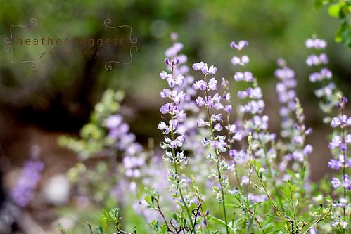 wildflowers 3 WM