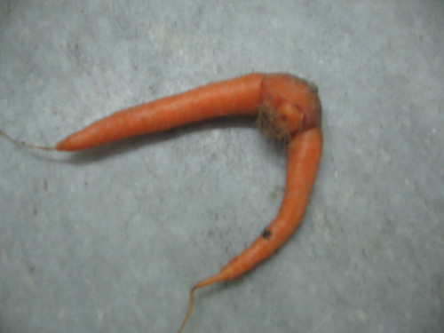 Two-legged carrot