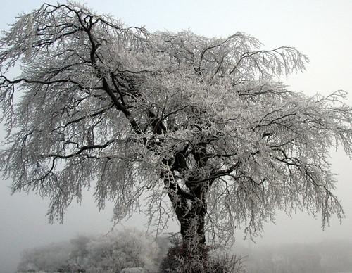 Freezing Fogged (4)