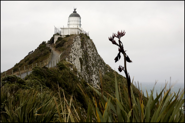 Nugget Point Lighthouse, New Zealand