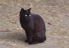 O pisica neagra si draguta!