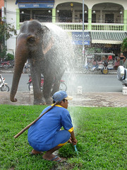 Elephant shower 1