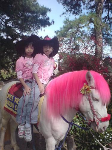 D & D on  a pony