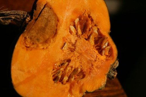 Funky insides of dessert/winter squash