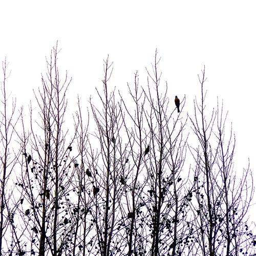 Unknown flock