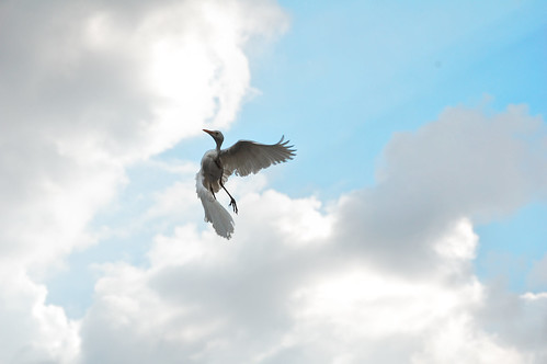 Follow the wind. by mzarzar, on Flickr