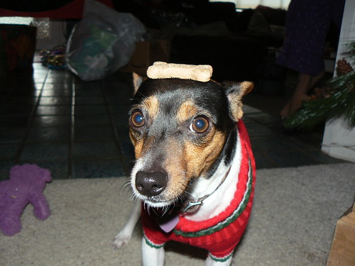 I won't move - even with a cookie on my head