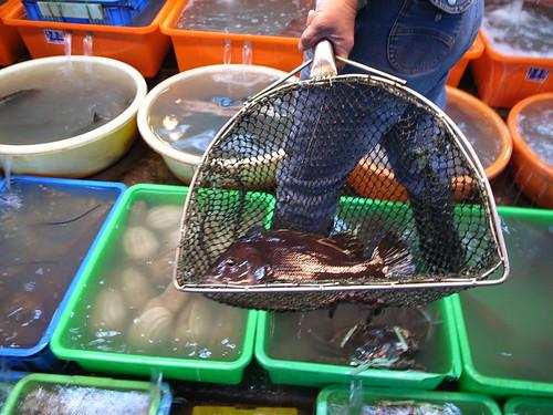 富基漁港:鯛�