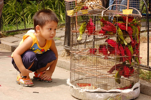 boy bird cage Pinoy Filipino Pilipino Buhay  people pictures photos life Philippinen for sale 菲律宾  菲律賓  필리핀(공화�) Philippines