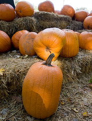 "IMG_1031: Pumpkins • <a style=""font-size:0.8em;"" href=""http://www.flickr.com/photos/54494252@N00/1826358280/"" target=""_blank"">View on Flickr</a>"