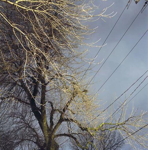 tod seelie tree jake lemkowitz poem