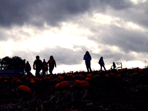 searching for pumpkins