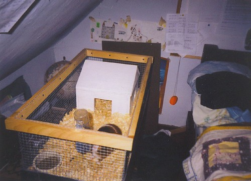 mario in his cage with his house