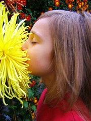 Smith College 2007 Fall Chrysanthemum Show (Photo credit: Sienna Wildfield)