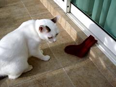 Class Sock