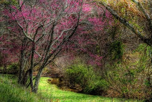 A Springtime Stroll