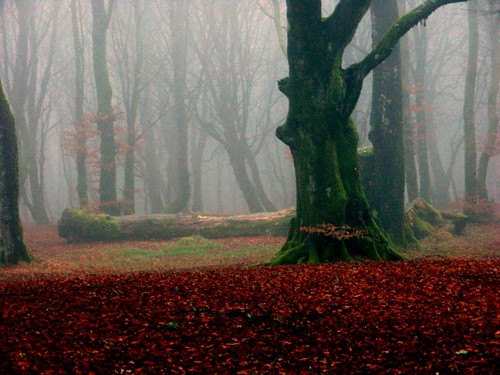 Forest on a foggy winter day