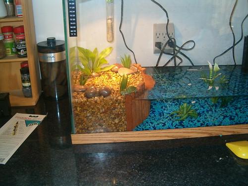 hatchling turtle tank