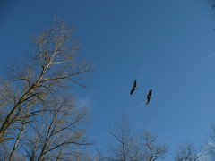 Bear Creek Park 043