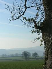 Garway Oak