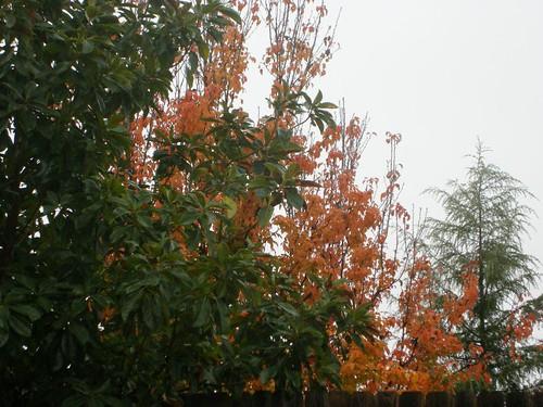 Magnolia and autumn leaves
