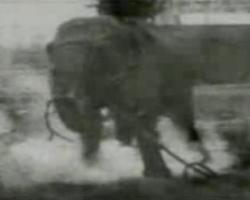 Topsy the eletrocuted elephant