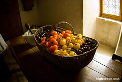 Ripe Tomatoes by cityphotographer