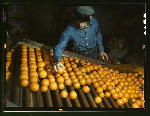 orange sorting in California