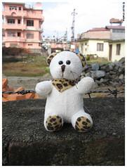 Tutu, the teddy bear by Ayush Khadka