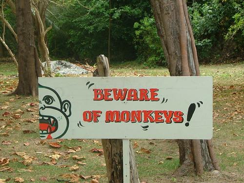 Bewareofmonkeys