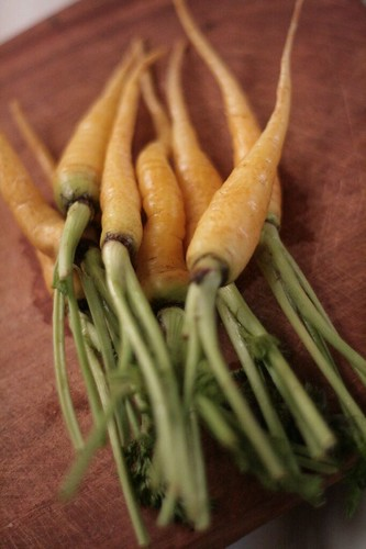 Lovely golden carrots