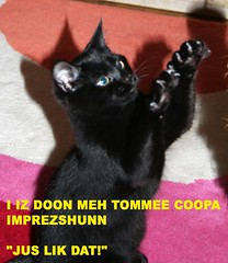Tommee Coopa
